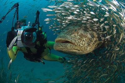 Обнаружен новый вид гигантских рыб-пожирателей осьминогов