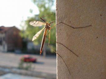 В Москве завелись комары-убийцы