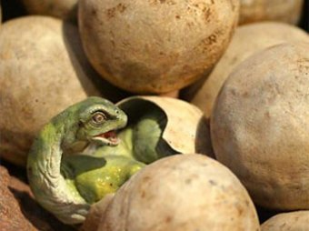 Воронежские школьники нашли на берегу Дона яйца динозавра