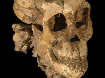 Скелет трехлетней девочки раскрыл тайну эволюции человека