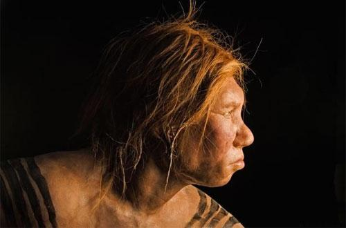 Возраст костей черепа прототипа Вилмы насчитывает 43 000 лет…