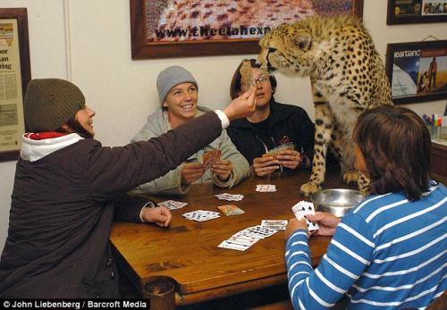 Одиннадцать домашних хищников (6 фото)