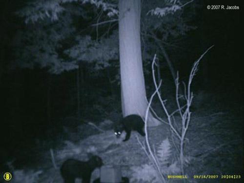 Единственное, что известно на данный момент ученым, так это то, что камера стояла в Национальном парке Аллегени в районе города Риджвей. Точное место Джейкобс в своем письме не указывает...