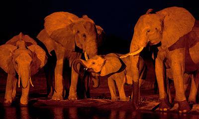Слоны пришли на водопой ночью в национальном парке Восточный Цаво, Кения. (Ben Curtis/Associated Press)