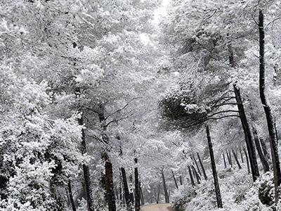 Заснеженные деревья в Руби, Испания. (Manu Fernandez/Associated Press)