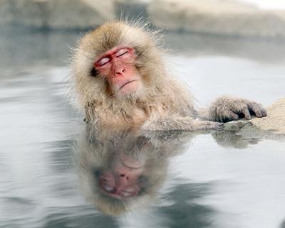 Японский макак греется в горячем источнике в парке обезьян «Jigokudani» в префектуре Нагано, Япония. (Nick Ut/Associated Press)
