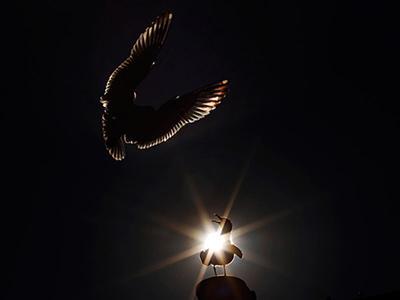 Силуэты чаек виднеются на фоне солнца в Бостоне. (Brian Snyder/Reuters)