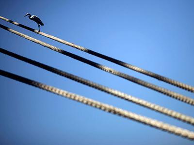 Белая цапля сидит на швартове судна в Рио-де-Жанейро. (Ricardo Moraes/Reuters)