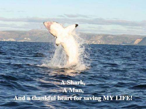 """Невозможно избавиться от почти 6-метровой акулы не только из-за того, что белые акулы занесены в Белую Книгу, но и из-за привязанности между Арнольдом и """"Синди"""" – так Арни обозвал свою «воздыхательницу»…"""