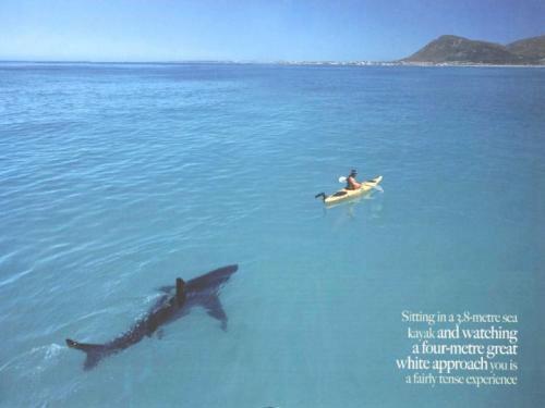 Сегодня у рыбака серьёзная проблема - акула следует за ним куда бы он не плыл, отпугивая рыбу.«Я не знаю что мне делать» - говорит Арнольд.
