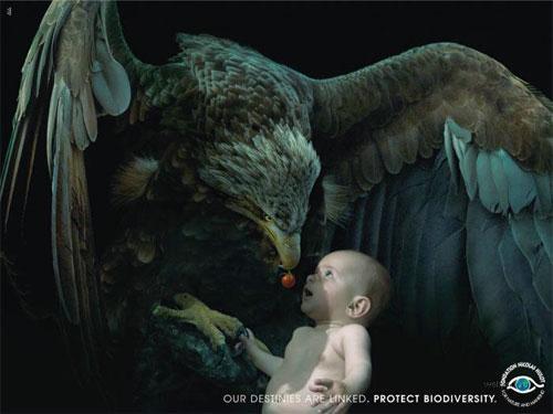 …И кормит из клюва гигантский орел - заботятся всей природой…Так и людям надо заботиться о природе - «Наши судьбы связаны. Защитите биологическое разнообразие» - гласит рекламный слоган…