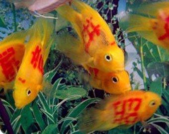 Мода на татуированных рыб захлестнула Китай